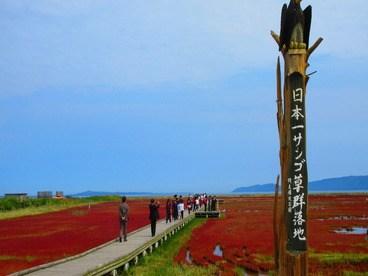 《サンゴ草》北海道網走市の能取湖々畔に広がるサンゴ草復活「深紅のじゅうたん」まとめ
